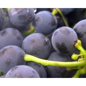 Monitoring Oxygen and pH during Red Grape Fermentation