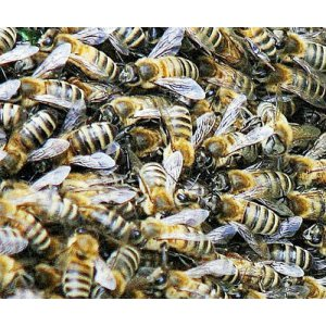 Detects Insecticide Associated with Loss of Honeybee Colonies